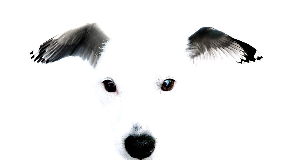 De vliegende hond 01